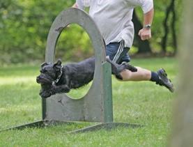 turnierhunde